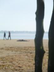 Etonnants immobiles voyageurs, Saint Malo 2012
