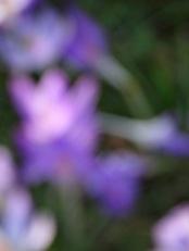 Couleur 4 Jardin des Plantes Hiver 2013