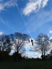 Pinces à nuages, Gouvets, Fin 2013 2 Copie